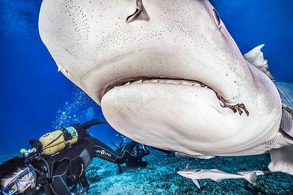 Croisière plongée en catamaran Tuamotu Polynésie Française