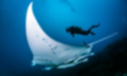 Croisière plongée Polynésie Française Tikehau