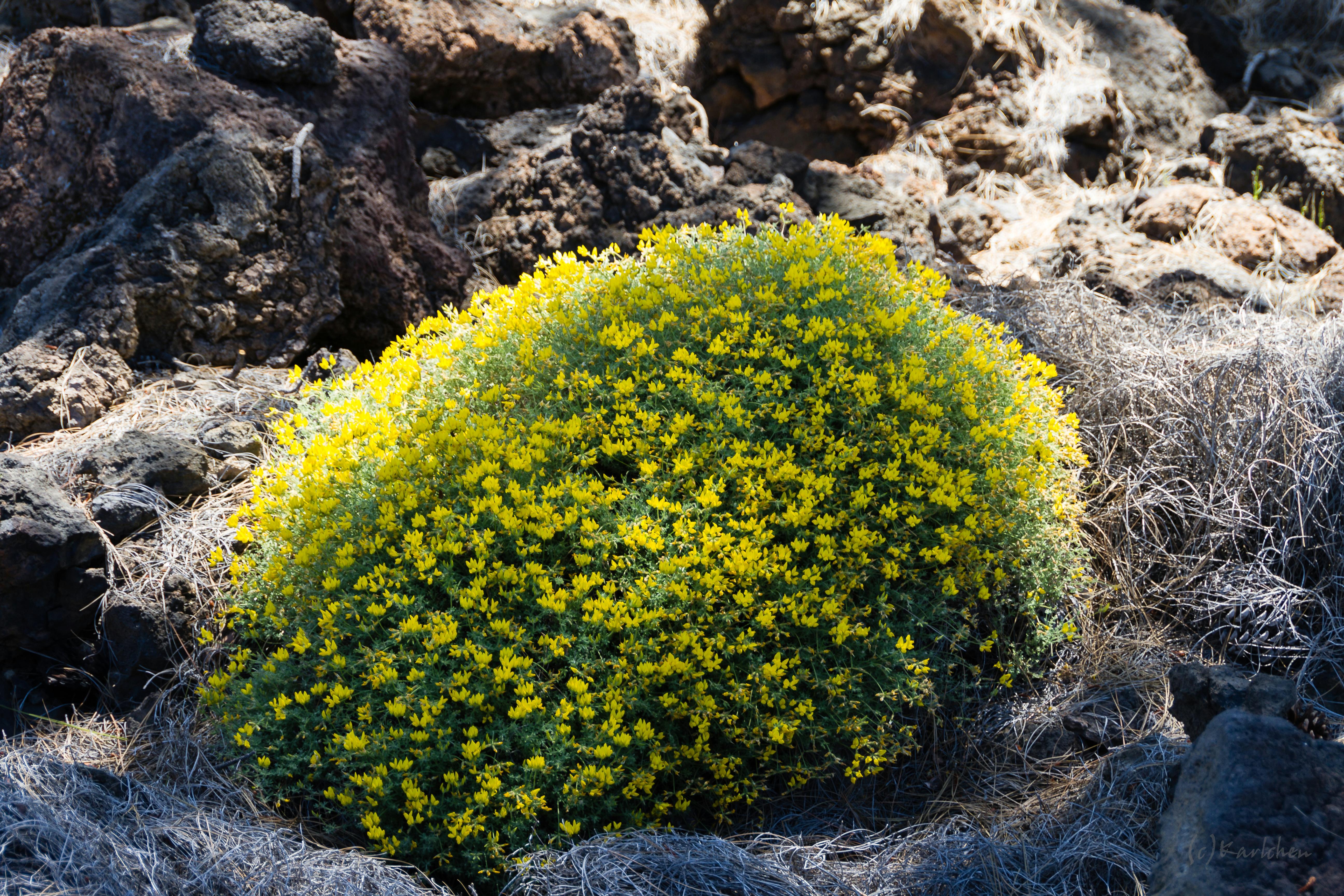 Frühling zwischen Steinen