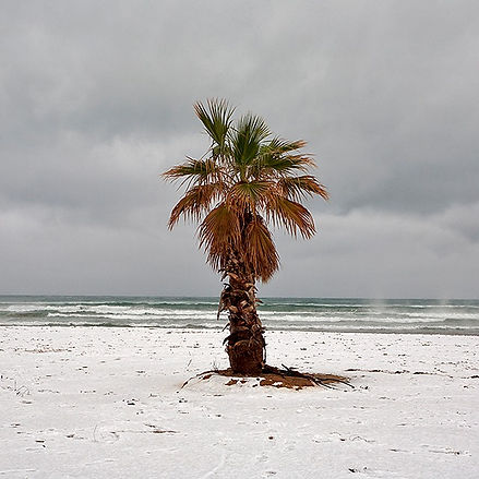 Snowy Palm Tree