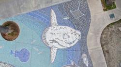 Ocean Sunfish 75 DJI_0672