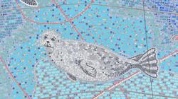 Harbor Seal 115 DJI_0783