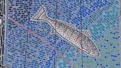 White Seabass 40