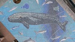Gray Whale Juvenile JJ 114 DJI_0841