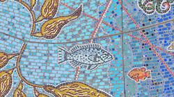 Blue Rockfish 65 DJI_0804