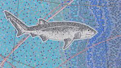 Broadnose Sevengill Shark 91  (1)