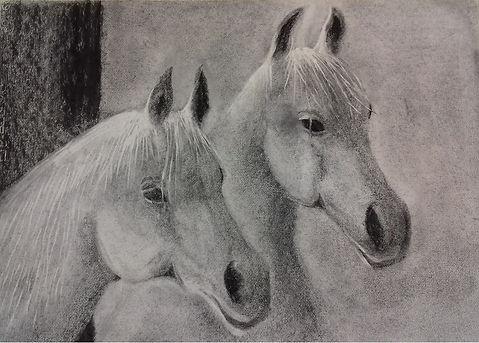 323_Zwei_Pferdeköpfe_in_Kohle.jpg