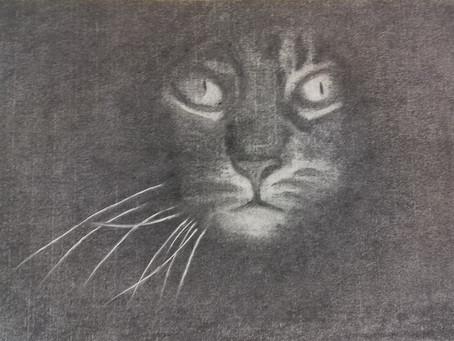 Katze - Ein Kohlenbild von Christopher Baumann