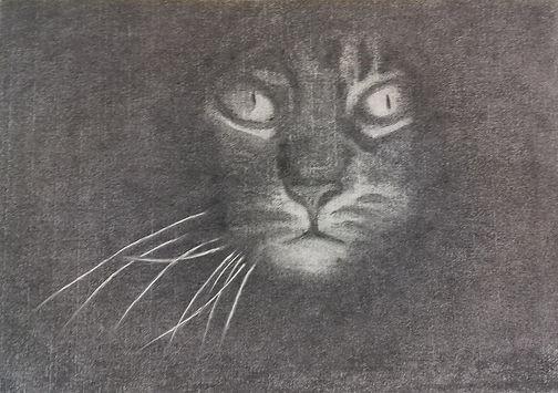 322 Katze in Kohle.jpg