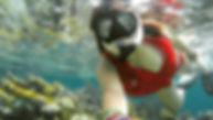 Snorkelling the Belize Barrier Reef