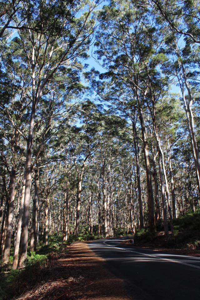 Here in the Karri Forrest, Western Australia, I'm crouching!