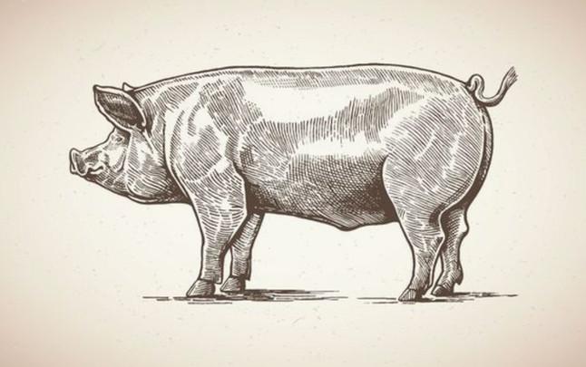 African Swine Fever update.