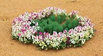 Wildflower-Country_Wildflower_Wreath-Flo