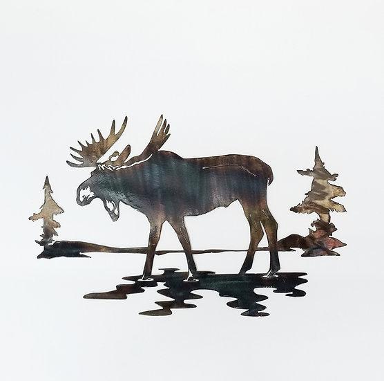 Single Bull Moose