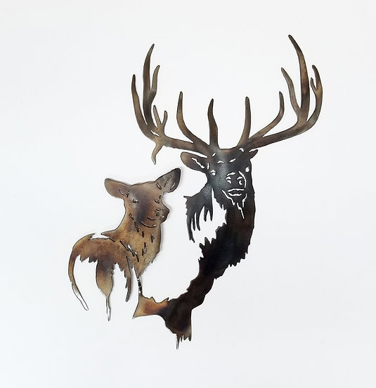 Bull & Cow Elk Head Shot