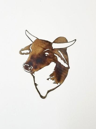 Brahma Bull Head