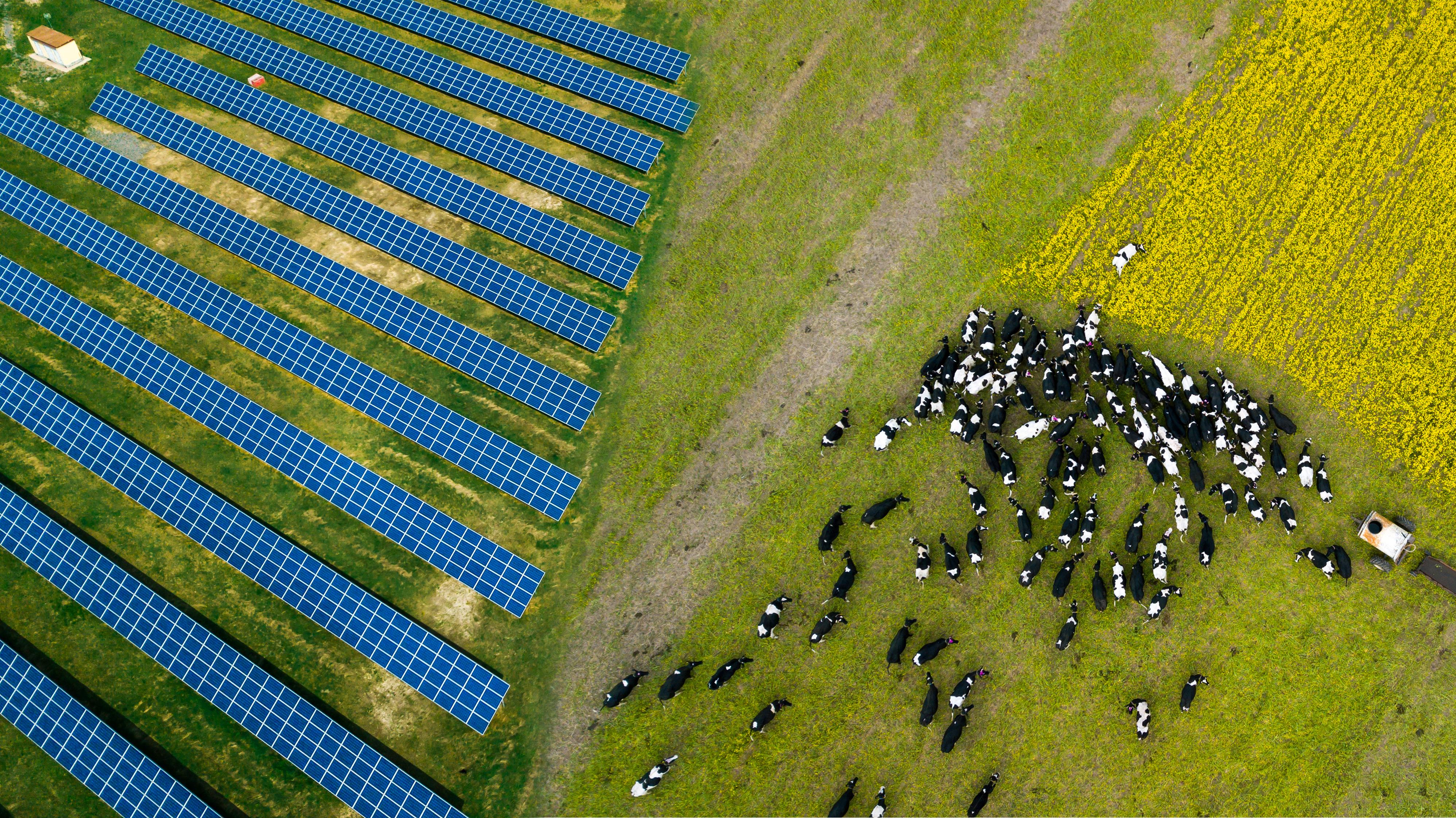 Solar on Farmland