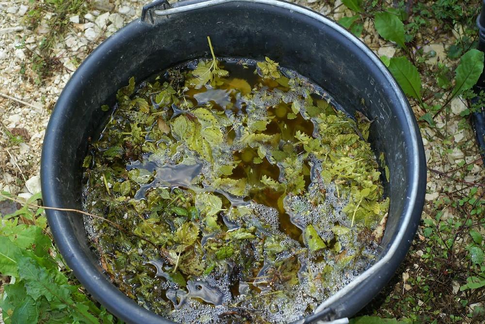 mélisse macérant dans un seau d'eau