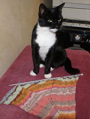 Praline chatte noire et blanche