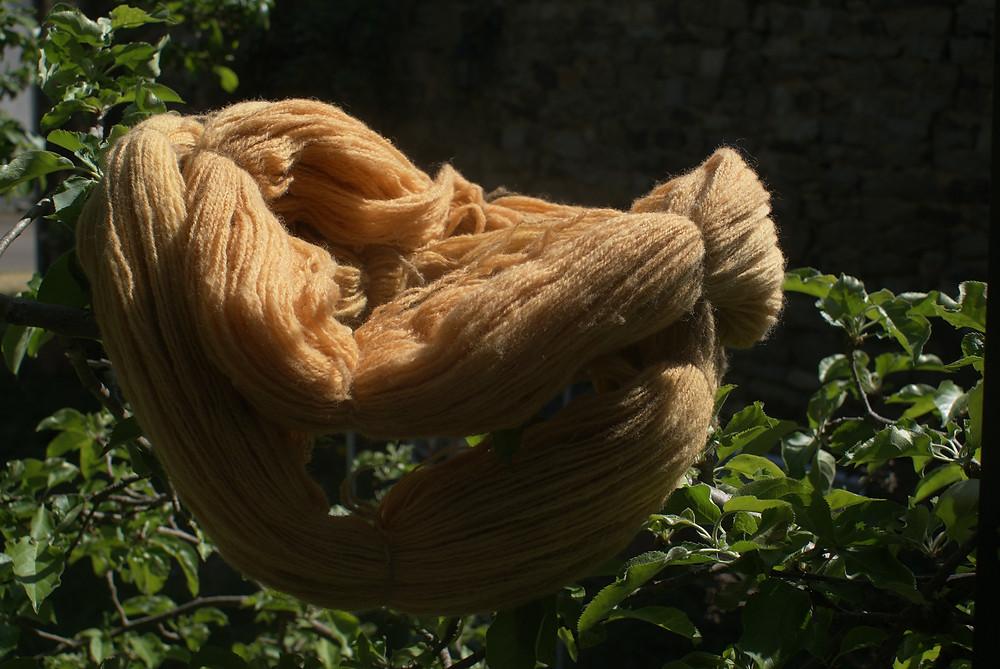 laine teinte aux pelures d'oignons
