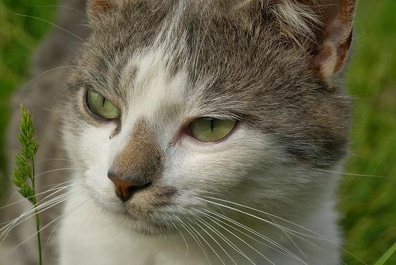 Queue-cassée chat errant