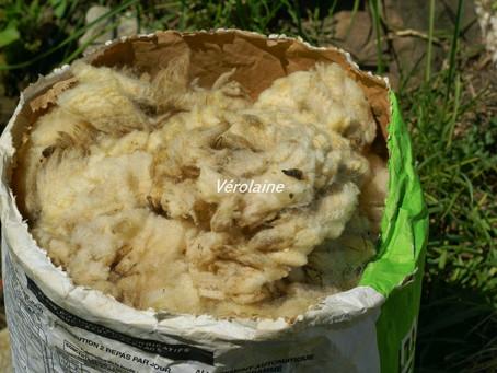 Traitement de la laine ( le lavage )