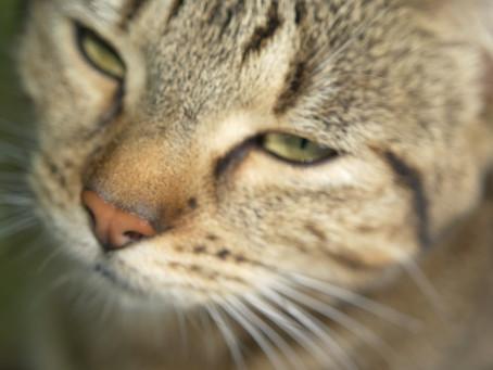 Tigrou le chat qui ne voulait pas mourir