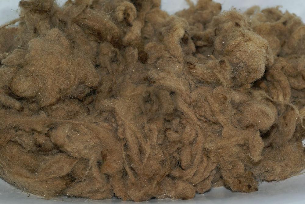 laine teintée avec de la mélisse