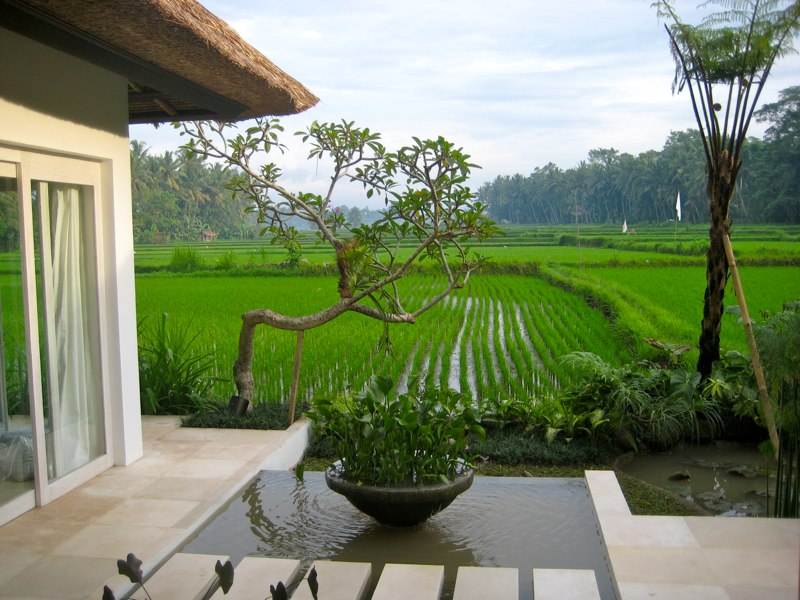 View of the Pond and the rice fields