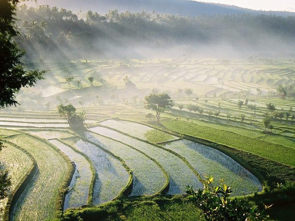 Bali Villas view of rice fields