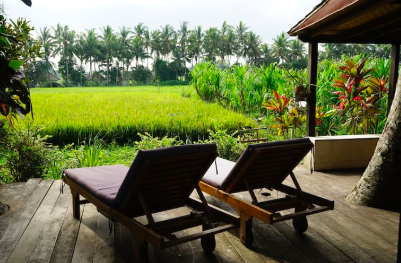 View of rice fields and lounging chairs