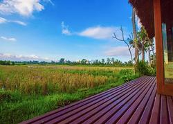 Balcony and Rice Fields Views