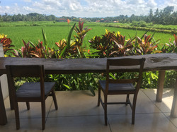 View of the balcony and rice fields