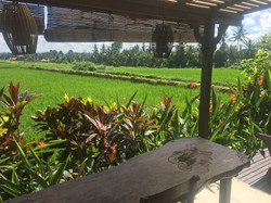 View of outside dining and rice fields