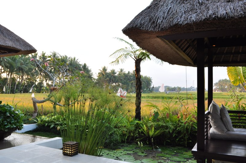 View of rice fields from Meditation Shal