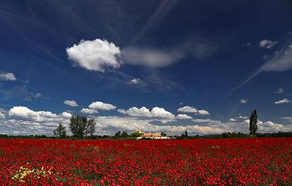 Vaucluse France Art Photographie Fleur Paysages