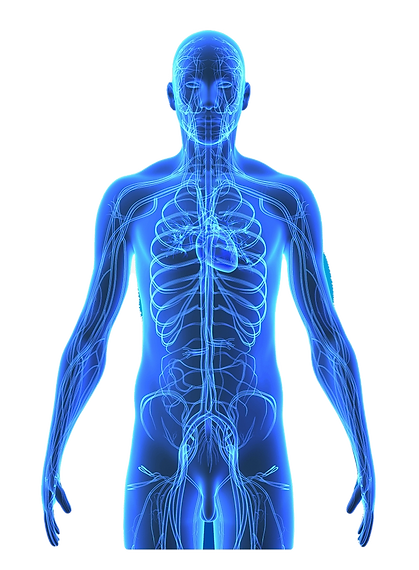 71-715662_human-body-png-png-royalty-free-cuerpo-humano_edited.png