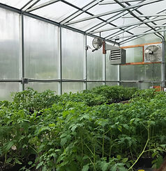 Greenhouse2020.jpg