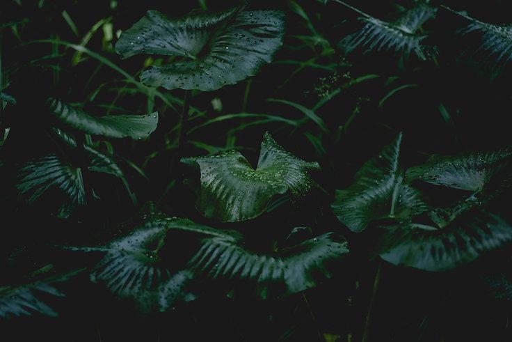 Pflanze 3.jpg