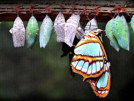 Le Cycle de la Transformation
