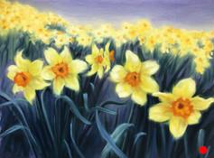 SOLD - Daffodil Super Bloom.jpg