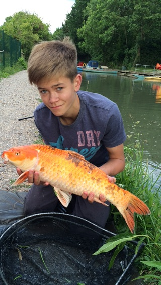 lewis stagg 6lb 5oz koi carp from odiham