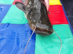 Wells Catfish
