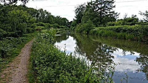 Basingstoke, Canal, Authority, fishing, Angling, hampshire, surrey, bcaafish