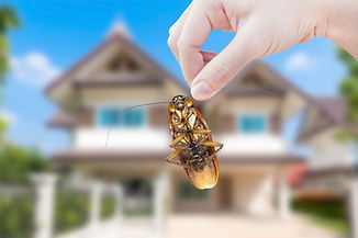 Woman's Hand holding cockroach on house