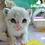 Thumbnail: 동물병원 PPT템플릿