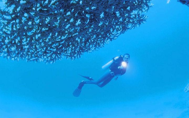 spécialité plongée sous-marine