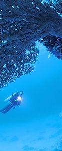 Gorgonian Fan Canyon Coral Island Tioman Malaysia