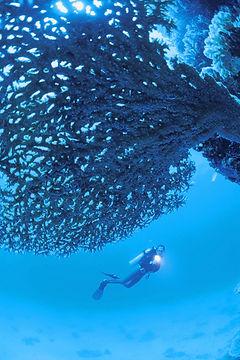 Plongée sous marine by xtreme