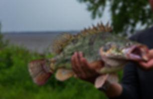 ауха рыболовные туры на реке амур